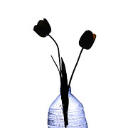 Bottle Photos - Black tulips by Bernard Jaubert