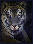 LeeAnn McLaneGoetz McLaneGoetzStudioLLCcom - Black Velvet Tiger