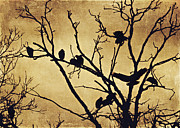 Vultures Prints - Black Vultures at Rest Print by Jessie Gould