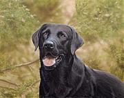 Black Labrador Posters - Black Watch Poster by John Silver
