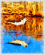 Black Winged Stilt Framed Prints - Black winged Stilt Framed Print by George Rossidis