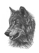 Pack Animal Drawings Posters - Black Wolf Poster by Sheri Marean