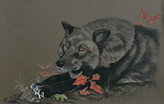 Wolf Pastels Framed Prints - Black Wolf Framed Print by Sherri Strikwerda