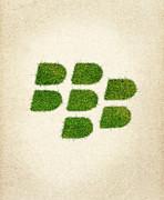 Blackberry Grass Logo Print by Aged Pixel