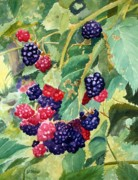 Todd Derr Prints - Blackberry Patch Print by Todd Derr