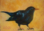 Donna Shortt Framed Prints - Blackbird Horizontal Framed Print by Donna Shortt