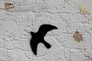 Urban Photograph Posters - Blackbird Poster by John Daly