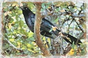 Blackbird Print by Lorri Crossno