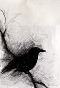 Blackbirds Drawings Posters - Blackbird Poster by Maria Kitano