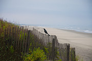 Blackbird Digital Art Posters - Blackbird on a Fence on the Beach Poster by Bill Cannon