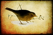 Natuur Photos - Blackbird under the feeding table by Steppeland -