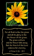 Blackeyed Susan With Bible Quote From 1 Peter Print by Rose Santuci-Sofranko