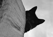 Photography Of Black Cats Photos - Blackie bw by Elizabeth Sullivan