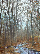 Fall Trees With Stream. Art - Blairstown Creek by Will Harmuth