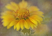 Lensbaby Close-up Posters - Blanket Flower Poster by David and Carol Kelly