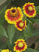 Wide Awake  Arts - Blanket Flower