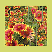 Blanket Prints - Blanket Flowers Collage Print by Ann Powell