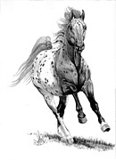 Pen Drawings Drawings Framed Prints - Blanketed Appaloosa  Framed Print by Cheryl Poland