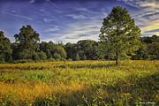 Trumbull Connecticut Prints - Blazing Meadow Print by Fran Gallogly