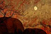 Bare Trees Mixed Media Metal Prints - Blazing Sunset   Metal Print by Sherry  Curry