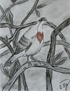 Dove Drawings Metal Prints - Bleeding Heart Metal Print by Anastasia Ely