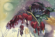 Fuschia Painting Posters - Bleeding Heart Poster by Clifton E Hadfield