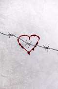 Barbed Wire Framed Prints - Bleeding Love Framed Print by Joana Kruse