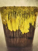 Paint Photograph Posters - Bleeding yellow Poster by AK Photography