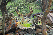 Blending Photo Prints - Blending In Print by Shane Bechler