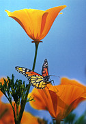 Insects Digital Art Metal Prints - Blessed by the Sun Metal Print by Evie Cook