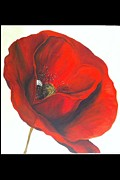 Poppy Drawings - Blinky poppy by Aysugul Alptekin