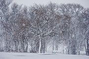 Winter Storm Art - Blizzard in the Park by Melany Sarafis