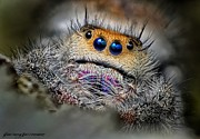 Jumping Spiders Framed Prints - Blond Jumper Framed Print by JFantasma Photography