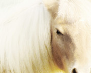 Horse Photography Prints - Blondie Print by Amy Tyler