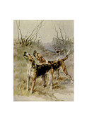 Bloodhounds Prints - Bloodhounds  Print by Maud Earl