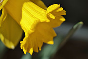 Bloom Print by Thomas  MacPherson Jr