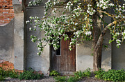 Entrance Door Pyrography - Blooming apple and old house by Anna Grigorjeva
