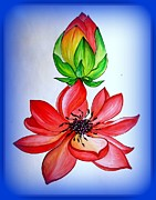 Lotus Bud Paintings - Blooming by Dr Reema Rastogi