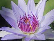 Blooming For You Print by Chrisann Ellis