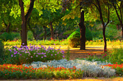 Sasa Prudkov - Blooming of flowers in...