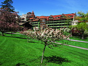 April K Rabino - Blooming Tree at Mohonk...