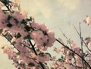 Michelle Calkins - Blooms in Spring