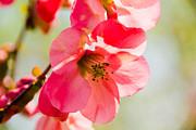 Leia Burt - Blossom Beauty
