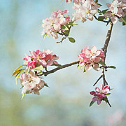 Pink Flower Branch Prints - Blossom Branch Print by Kim Hojnacki