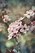 Sakura Mixed Media Prints - Blossom Print by Gynt Art