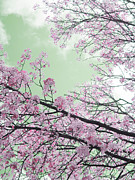 Guy Ricketts Photography Prints - Blossoms Passing Fair Print by Guy Ricketts
