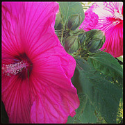 Brittany Perez Metal Prints - Blosssoms and Buds Hibiscus  Metal Print by Brittany Perez