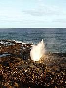 Spouting Prints - Blowhole Print by Ellen Henneke