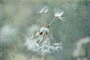 Andrea Kollo - Blowing in the Wind