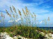 Sea Oats Metal Prints - Blowing In The Wind Metal Print by Mel Steinhauer